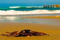 Crabe sur la plage image stock