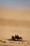 Crabe sur la plage Photographie stock libre de droits