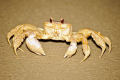 Crabe sur la plage Photos stock