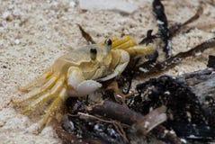 Crabe sur la plage Images libres de droits