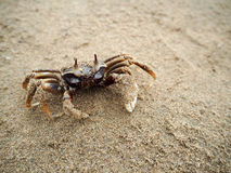 Crabe sur la plage Photo stock