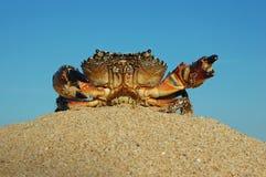 Crabe sur la plage dans le sable Photos libres de droits