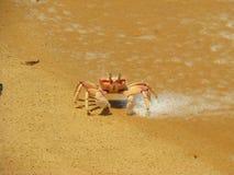 Crabe sur la plage sur l'île de Bazaruto photos libres de droits