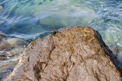 Crabe sur la roche Image libre de droits