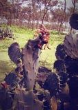 Crabe sur le cactus Photo libre de droits