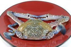 Crabe sur le plan rapproché rouge de paraboloïde Photographie stock libre de droits