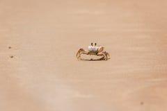 Crabe sur le rivage Photos libres de droits