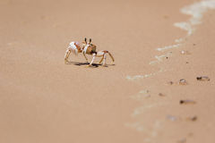 Crabe sur le rivage Photo libre de droits
