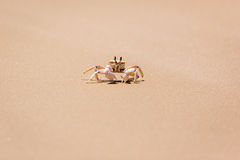 Crabe sur le rivage Photo stock