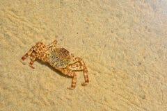 Crabe sur le sable Images stock