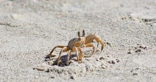 Crabe sur une plage sablonneuse Photos stock