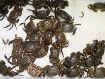 Crabe vivant de mer dans le panier Photo libre de droits