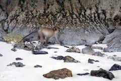 Crabeater del macaco, isole dell'arcipelago di Phi Phi immagini stock libere da diritti