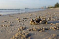 Crabes à la plage Photographie stock libre de droits
