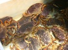 Crabes à vendre Photos libres de droits