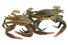 Crabes Image stock
