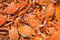 Crabes Photo stock