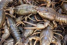 Crabes Photographie stock libre de droits