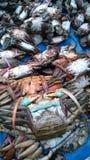 Crabes Image libre de droits