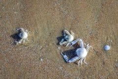 Crabes blancs effacés aux shors images libres de droits