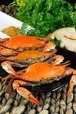 Crabes bleus cuits à la vapeur chauds avec du gingembre Crabes du Maryland Cuit et tout préparé Photos stock