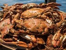 Crabes bleus cuits à la vapeur du Maryland images libres de droits