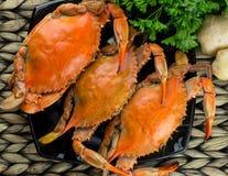 Crabes bleus du Maryland Crabes cuits à la vapeur Fest de crabe Photographie stock libre de droits