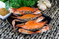 Crabes bleus du Maryland Crabes cuits à la vapeur Fest de crabe Image libre de droits