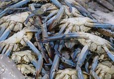 Crabes bleus pour la vente dans une stalle du marché photos libres de droits