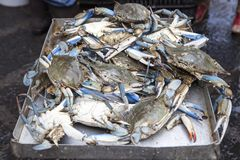Crabes bleus vendus au fishmarket Image stock