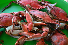 Crabes bouillis Photographie stock