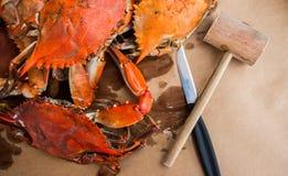 Crabes cuits à la vapeur avec des épices Crabes bleus du Maryland image stock