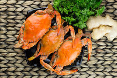 Crabes cuits à la vapeur avec des épices Festival de crabe et de bière Crabes bleus du Maryland Image stock