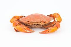 Crabes cuits à la vapeur pour la cuisson photographie stock libre de droits