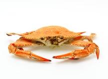Crabes cuits à la vapeur sur le fond blanc photos libres de droits