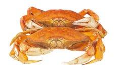 Crabes cuits Images libres de droits