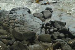 Crabes dans la baie de Kona photos stock