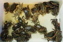Crabes de mer sur le marché de marine de panier Photographie stock