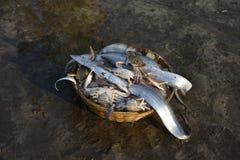 Crabes et poissons frais à la jetée de harne, Dapoli, Ratnagiri, maharashtra images stock