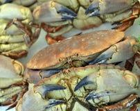 Crabes frais Image libre de droits