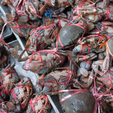 Crabes frais Photographie stock