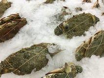 Crabes frais dans le supermarché photographie stock libre de droits