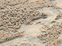 Crabes minuscules de Ghost creusant des trous images libres de droits