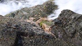 Crabes sur la roche banque de vidéos