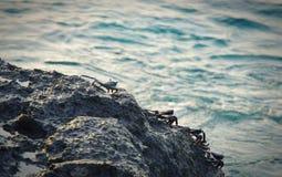 Crabes sur le corail Images libres de droits