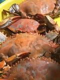 Crabes sur le plateau juste après être bouillie Image libre de droits
