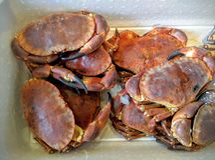 Crabes vivants dans la boîte Images libres de droits