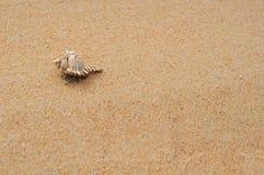 Crabl só do eremita na praia Imagens de Stock Royalty Free