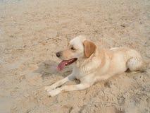 Crabot à la plage images stock