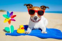 Crabot à la plage Photo libre de droits